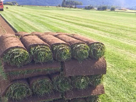 Sod Types West Jordan Utah