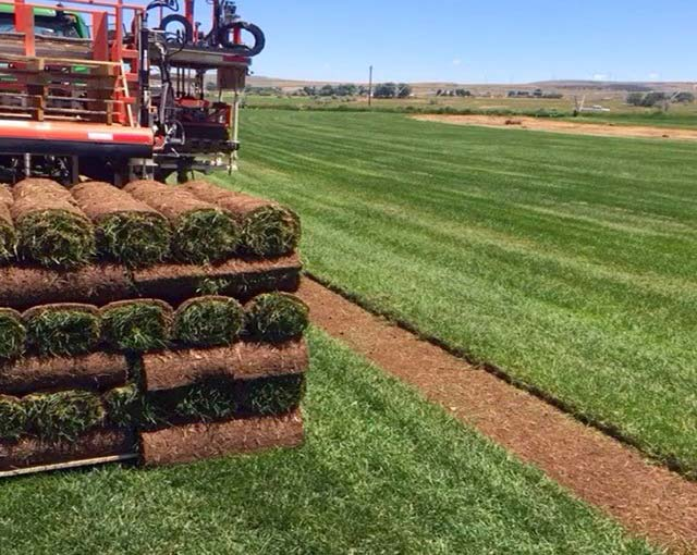 Sod Types Riverton