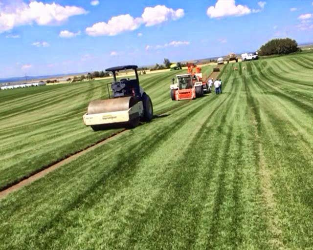 Sod Types South Jordan